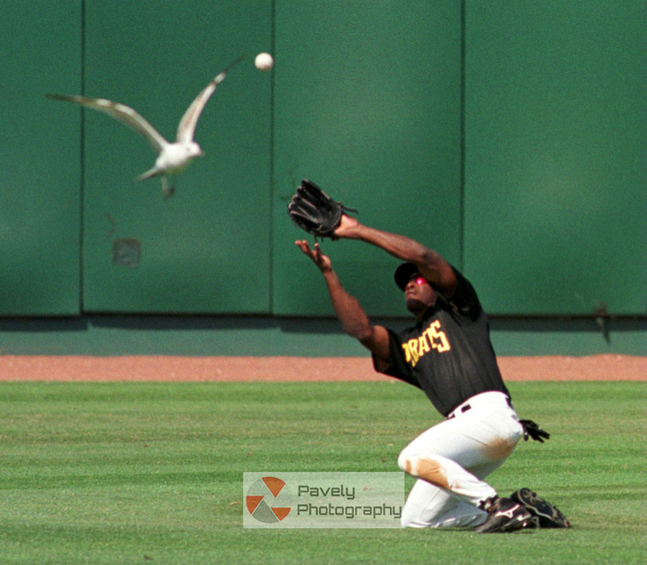Fowl Ball while working for www.triblive.com